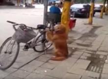 Dog Guards Bike