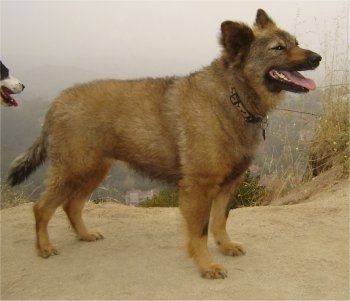 Dog Breed That Looks Like A Hyena