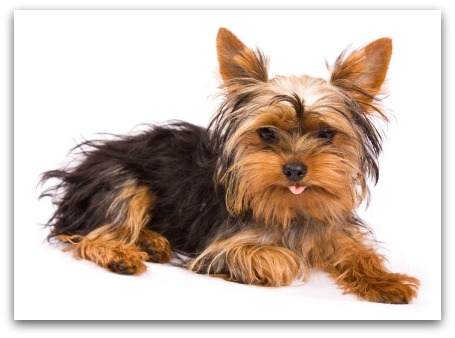 Image Result For Best Dog For Families With Allergies