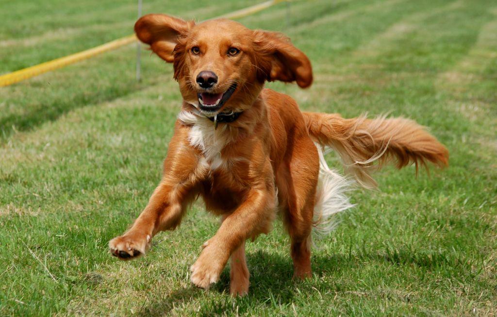 dog running drawing dog running