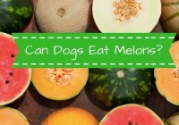 Can dogs eat melon?