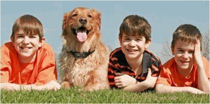 Benefits of Dog Bark Collar
