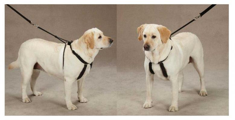 Best No Pull Dog Harness 2017