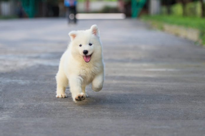 Everything You Need Before Bringing Home A New Puppy