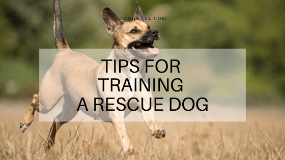 Tips for Training a Rescue Dog