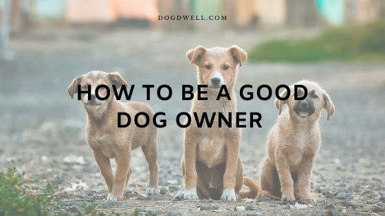 how to be a good dog owner