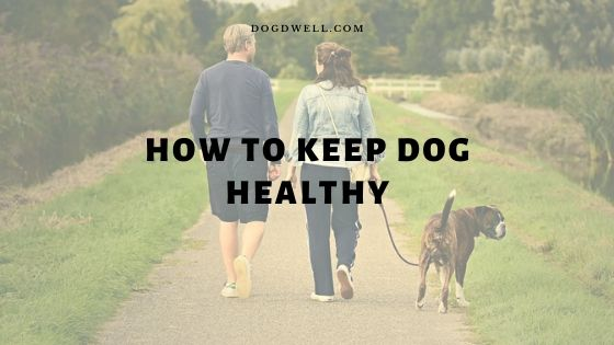 how to keep dog healthy