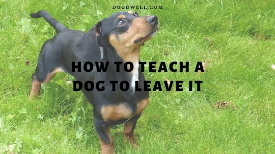how to teach a dog to leave it
