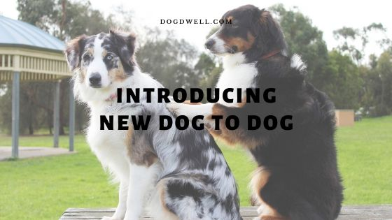 introducing new dog to dog