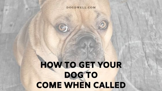 how to get your dog to come when called