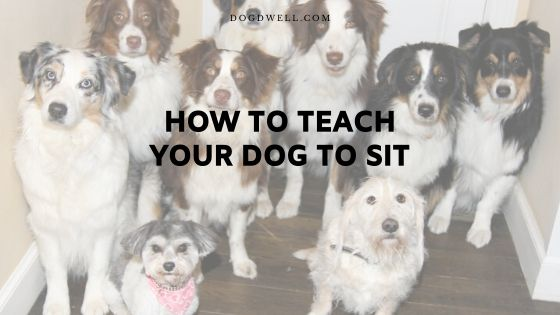 how to teach your dog to sit
