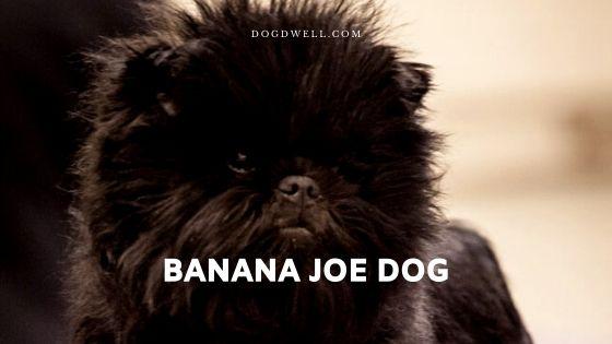 Banana Joe Dog
