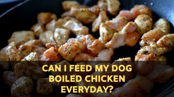 Can I Feed My Dog Boiled Chicken Everyday