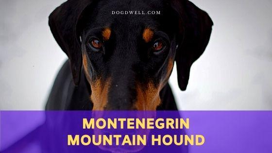 Montenegrin Mountain Hound