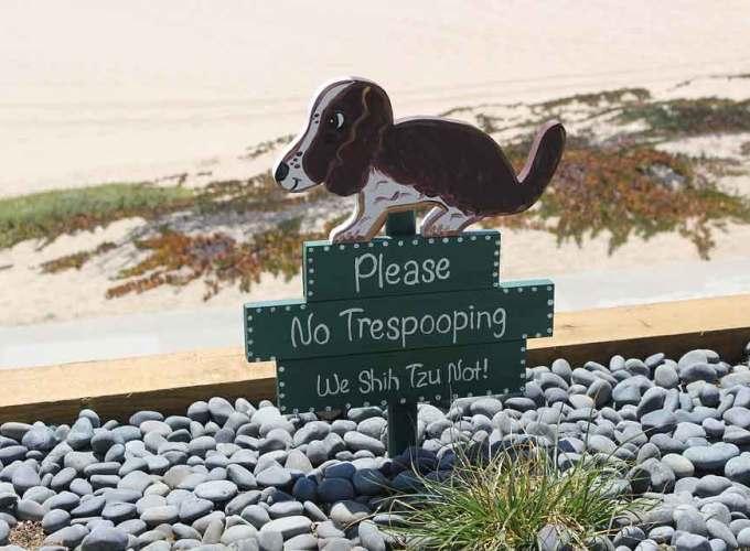 best way to potty train a puppy
