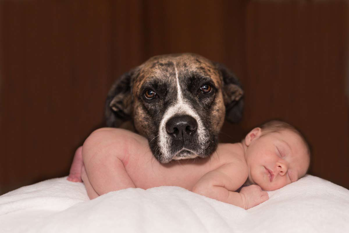 how to prepare my dog for a newborn baby