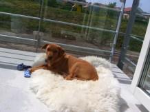 Det har varit helt otroligt varma dagar. Här ser ni hur jag har det på min balkong. Rätt ok faktiskt.