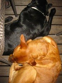 Wilma och jag gick och la oss.