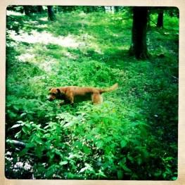 Paus i skogen.