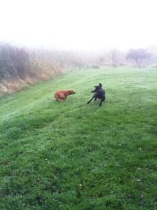 Fox springer så fort att han inte har några ben längre!