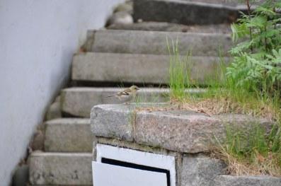 Husse såg en så fin liten pippi. Den fastnade tack vara snabbt agerande och ett nytt fint objektiv.