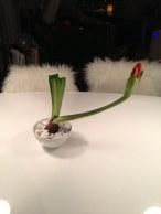 Alltså jag vet inte varför matte envisas med att visa upp denna blomma...