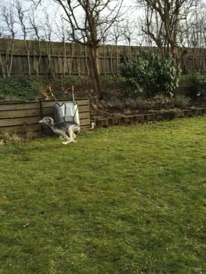 Bra fart i grannens trädgård!