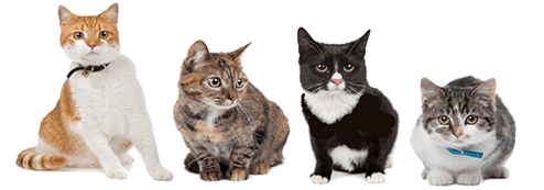 cat kennels and cattery doncaster