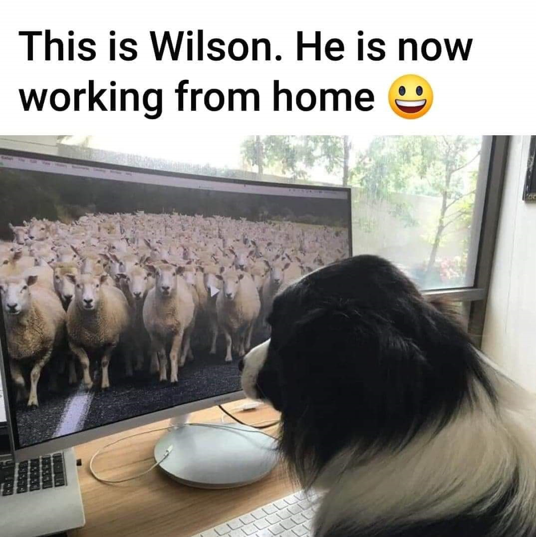 Friday Funny Working From Home Doggies Com Dog Blog