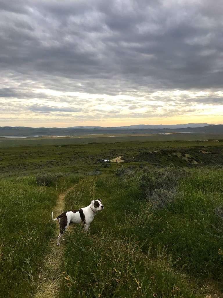 Dog Hike Carrizo Plain Superbloom 2017