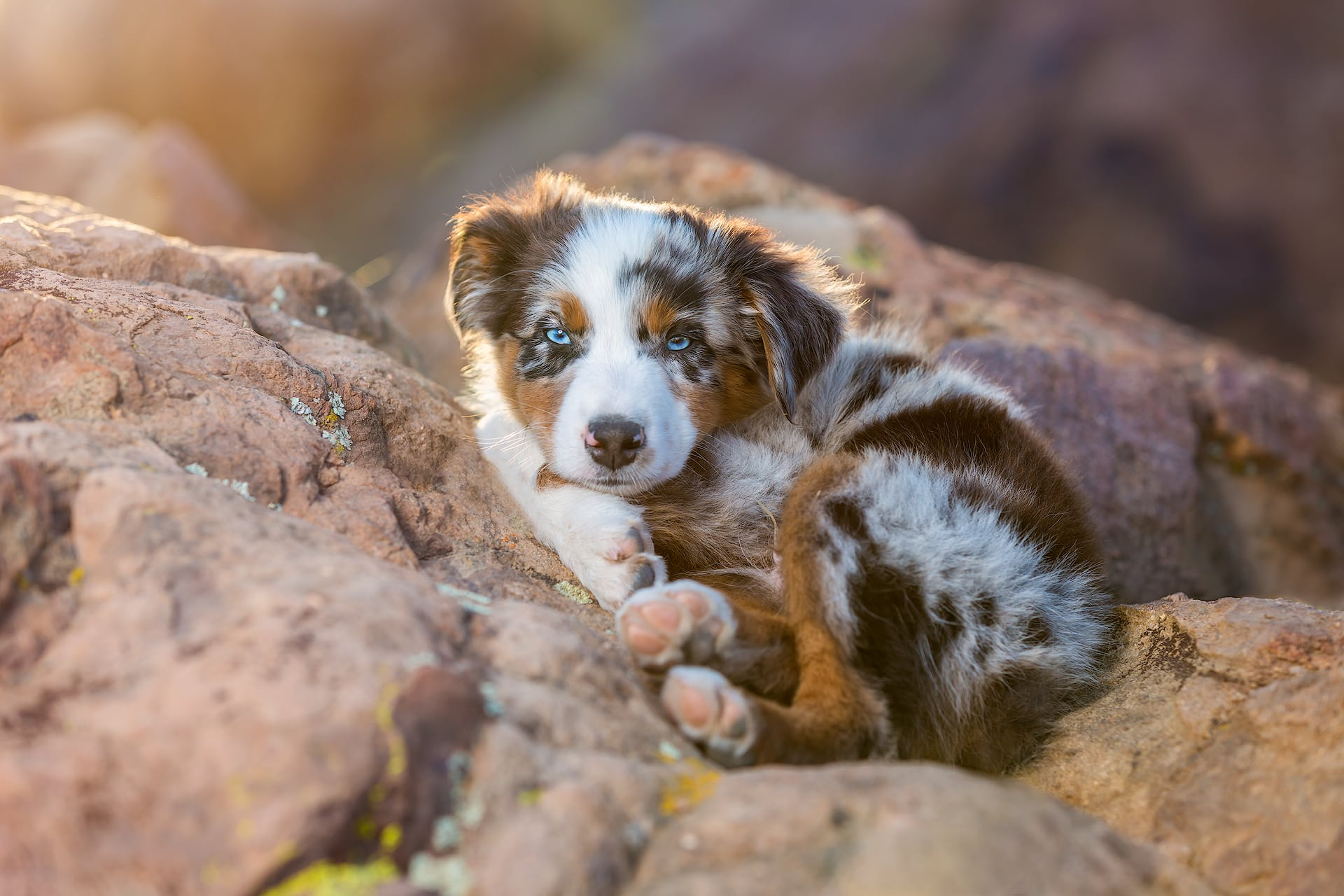 Best Los Angeles Dog Photographer