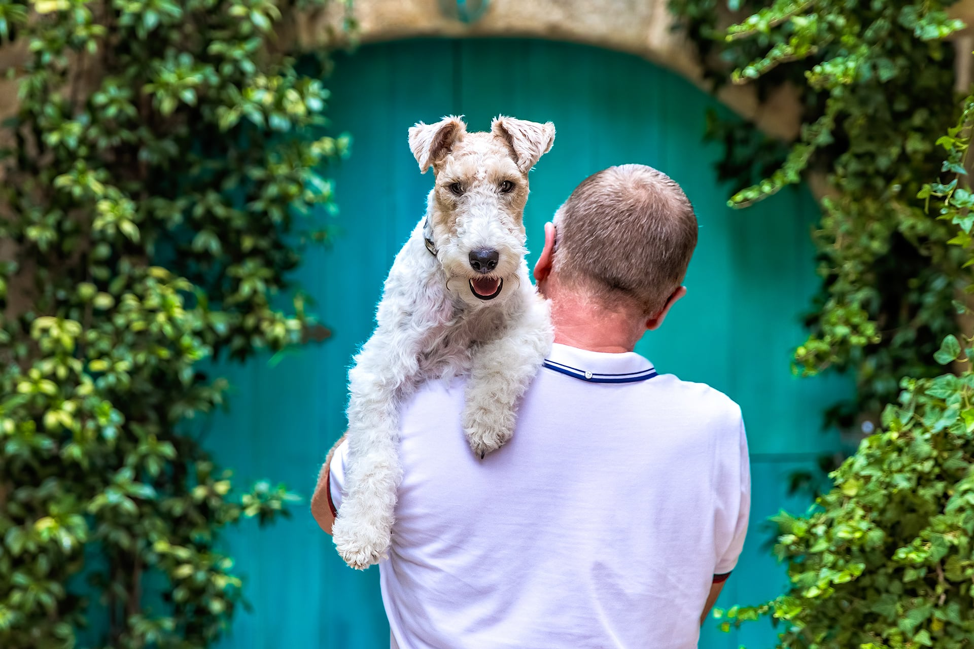 Wire haired fox terrier dog blue door courtyard