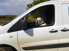 helen at Doggone Walkes, Stamford Dog Walking
