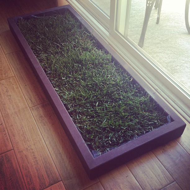 Grass For Dogs In Apartments Is A Great