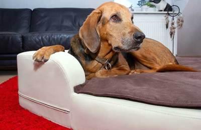 Softe Hundedecken