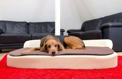 DoggyBed Medical Style Plus