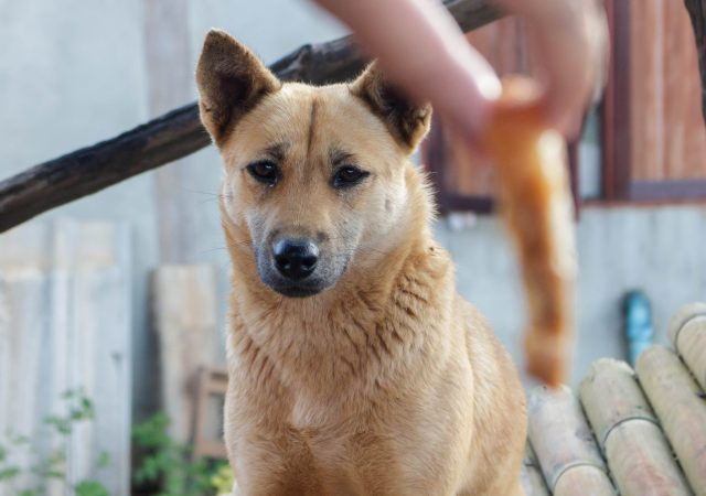 Dog starring at sausage dangling from a person's hand