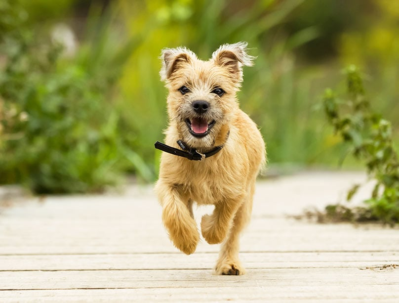 Image Result For Good Dogs For Allergies
