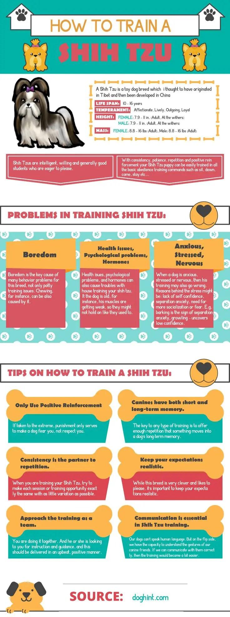 how to train a shih tzu doghint.com