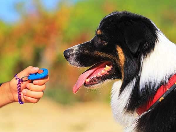 Dog Clicker Training Can Make Dog Training Easy