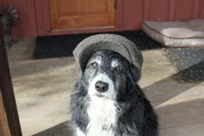 Why is Cookie wearing a hat. Is she waiting for a bone?