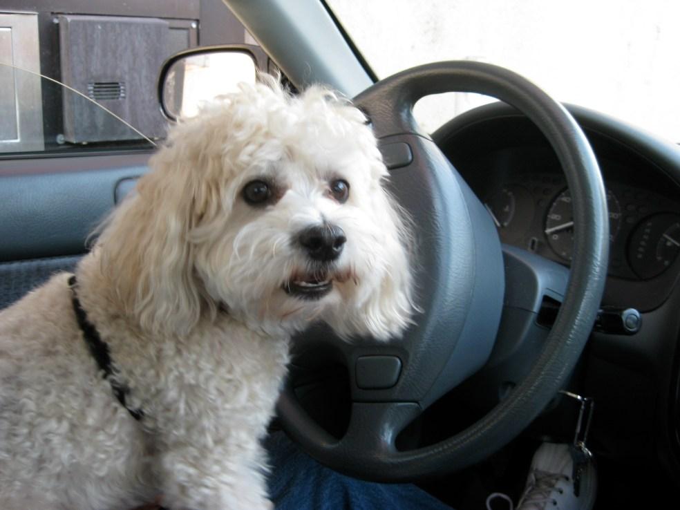 Buckle up! I've got my seat belt on.