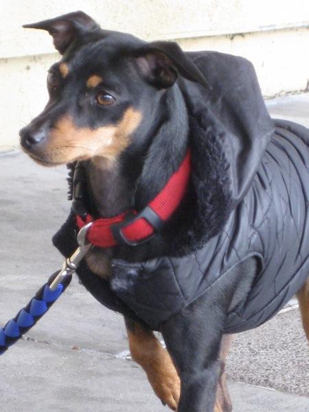 Black  tan jacket dtf