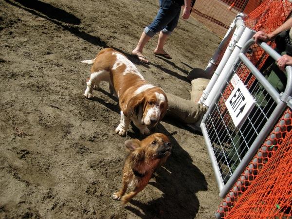Social small dogs