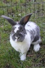 Waiting at a shelter near you, beautiful pet rabbits like this guy.