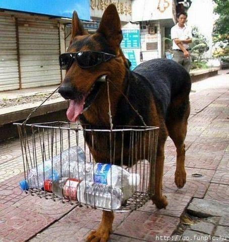 I'm a dog on the job.