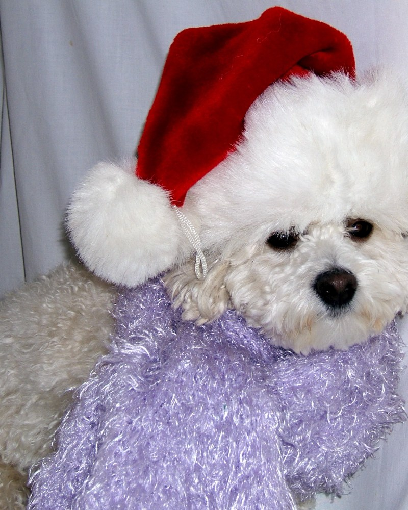 dog with santa hat on