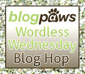 Hey, pet lovers get together on Blog Paws.