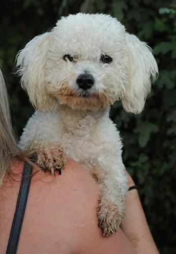 Bugaloo on Petfinder waits at a southern Calfiornia dog rescue