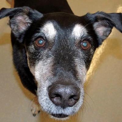 Senior dogs depend on us.